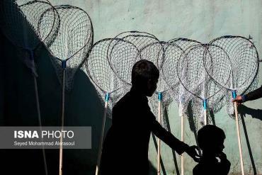 کودکان در بازار پرندگان مشهد