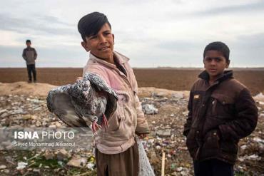 فروشندگان بازار پرندگان مشهد