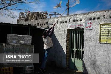 کبوتر در بازار پرندگان مشهد