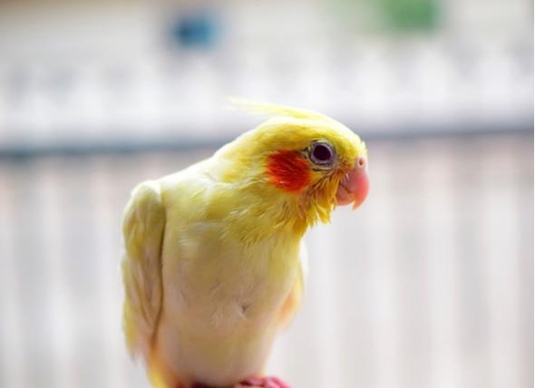 نشانههای بیماری در پرنده