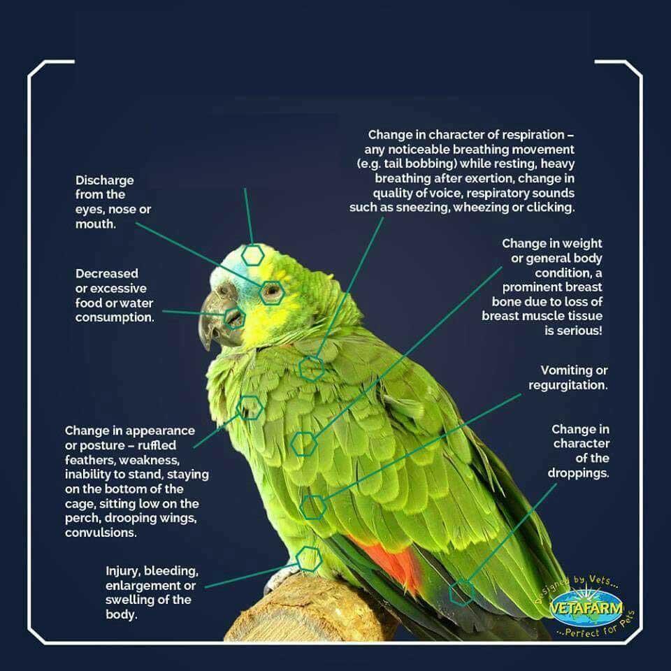 علائم بیماری در پرنده