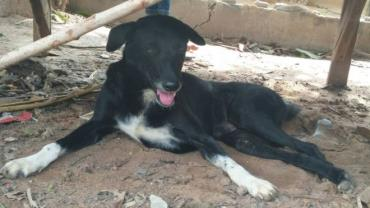 نجات نوزاد زنده به گور شده توسط سگ معلول