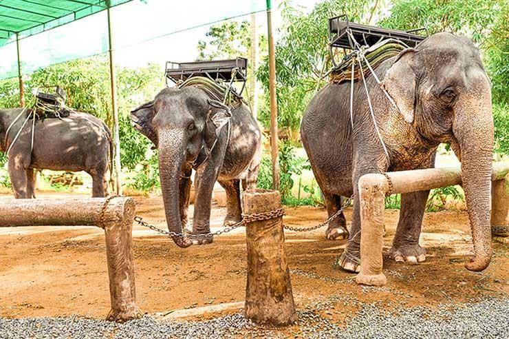 تفریح بیرحمانه با فیلها