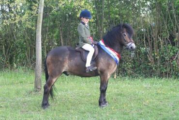 خصوصیات اسب پونی اکسمور