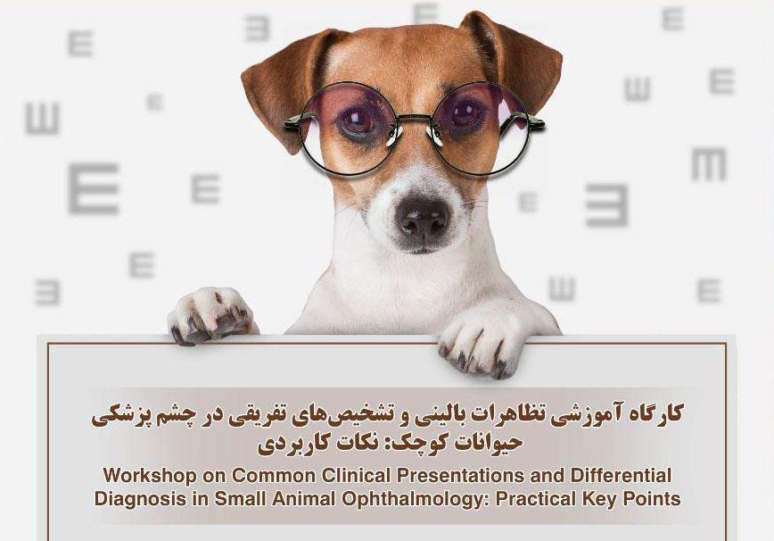 کارگاه چشم پزشکی حیوانات کوچک