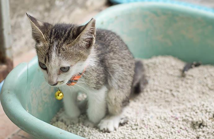 راههای درمان عفونت ادراری (UTI) در گربهها