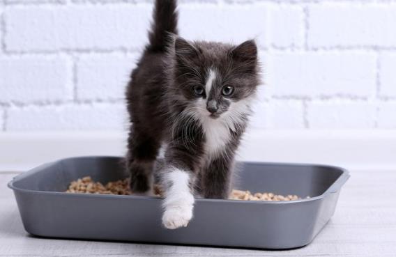 عفونت ادراری (UTI) گربهها