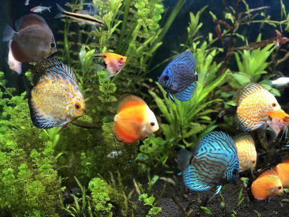 سرمایه موردنیاز برای پرورش ماهیان زینتی چقدر است؟