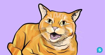 میو کردنها ریز گربه