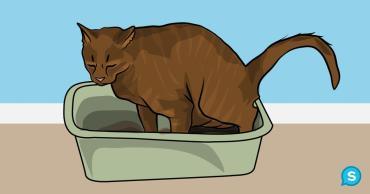 گربه ای که مدفوع خود را نمیپوشاند