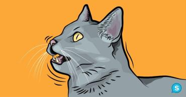 چهچهه یا جیرجیر کردن گربه