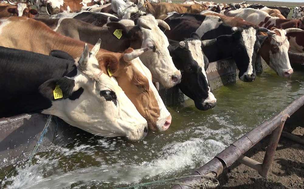 طریقه ضدعفونی کردن آب در شرایط مختلف