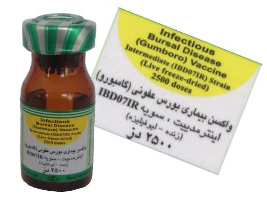 واکسن بورس عفونی، گامبورو