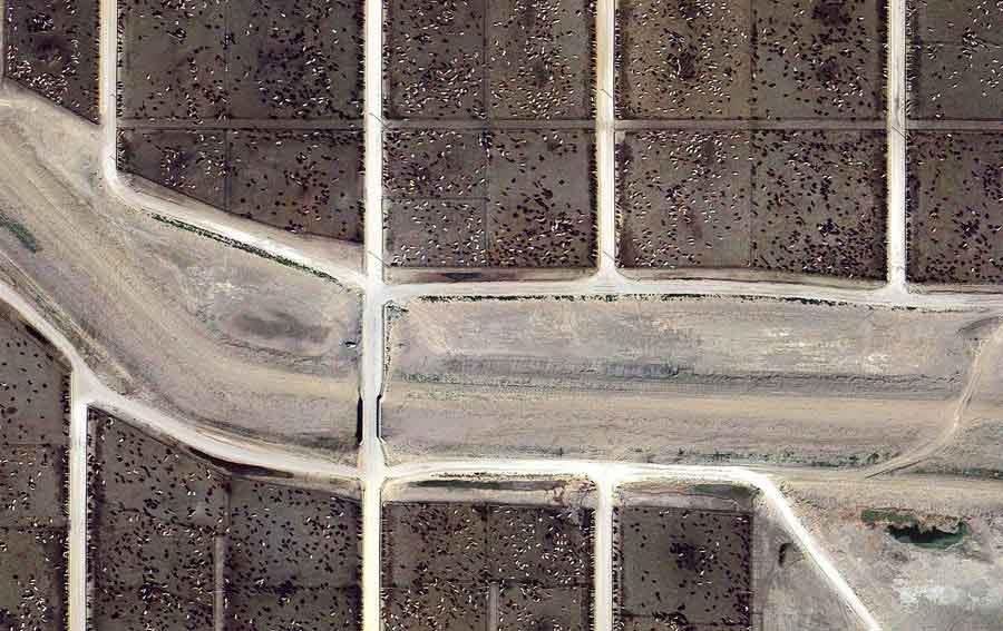 عکس هوایی از دامداریهای امریکا