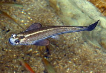 نگهداری ماهی چهار چشم