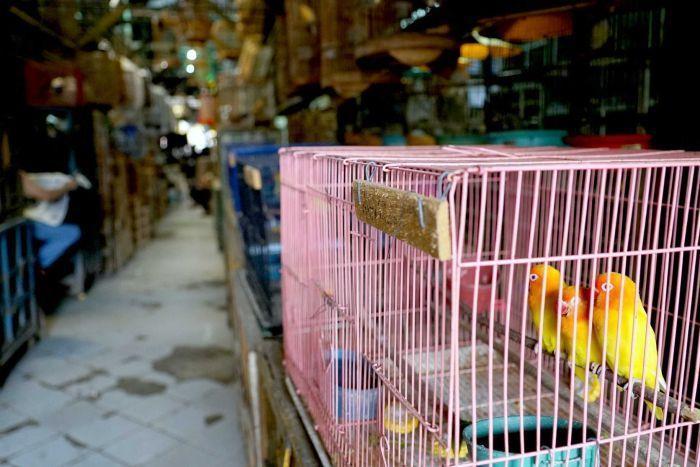 بهترین قفس برای پرندههای خانگی