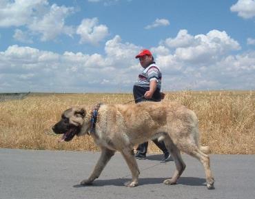 شرایط نگهداری سگ کانگال