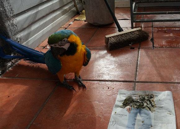 تشخیص بیماری پرندگان از طریق مدفوع