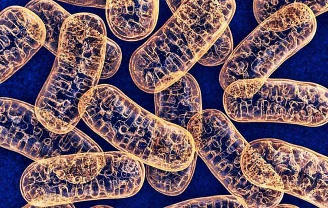 تأثیر متقابل «ایمنی - متابولیسم» زمینه تازه ای برای بررسی عملکرد جانوران