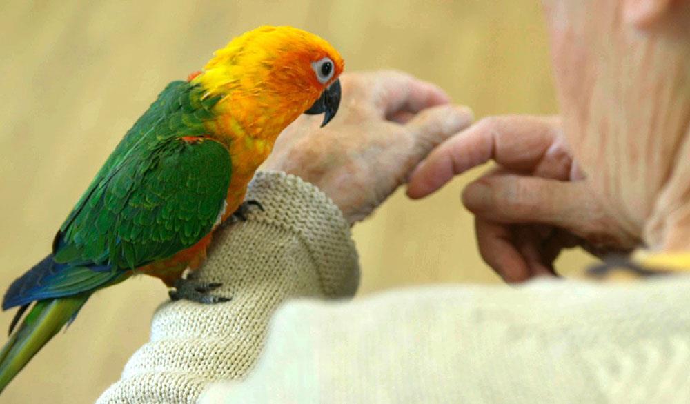تاثیر حیوانات خانگی در درمان افسردگی