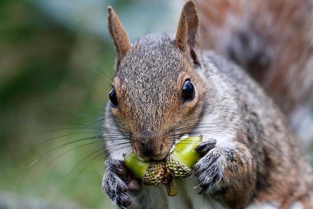 تغذیه سنجابها