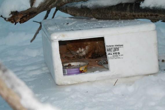 مراقبت از گربه های خیابانی از سرما