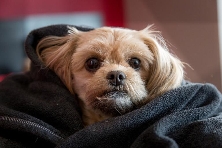 یافتههایی متفاوت از مزایا و معایب نگهداری حیوانات خانگی