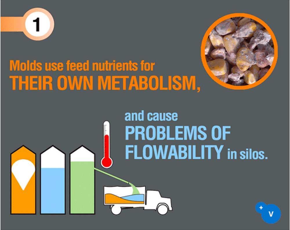 کپکها از مواد مغذی برای متابولیسم خودشان استفاده میکنند