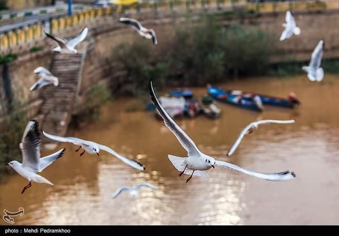 پرندگان مهاجر در اهواز