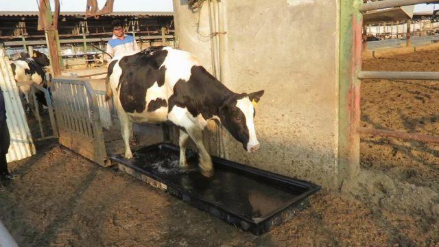 حمام سم قابل حمل