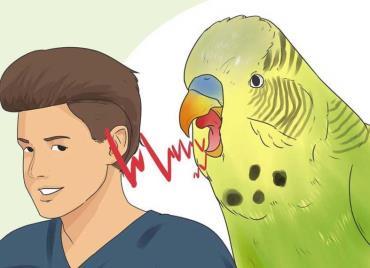 تشخیص جنسیت باتوجه به صدا و رفتار پرنده
