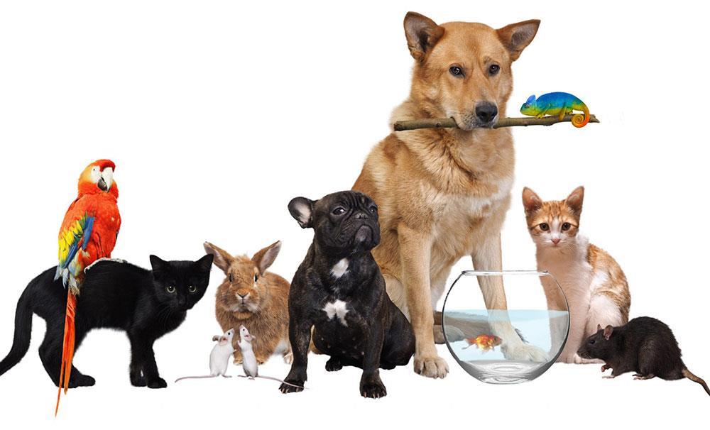 تب حیوانات خانگی در ایران؛ برآورد هزینهها