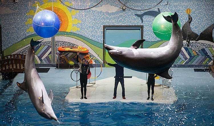 مرگ یک دلفین و دو شیر دریایی در دلفیناریوم برج میلاد