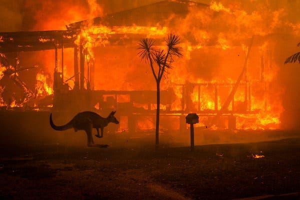 30 گونه جانوری در استرالیا منقرض شد