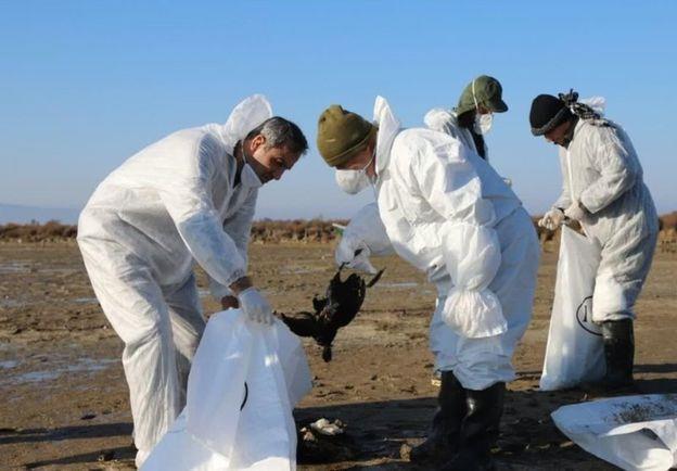 نتایج بررسی دلیل مرگ پرندگان در تالاب میانکاله