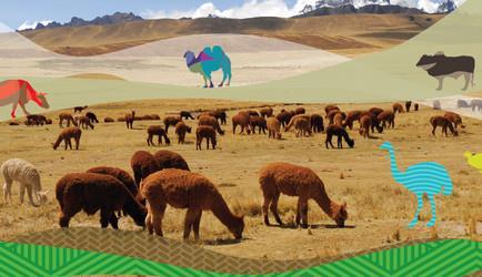 تنوع زیستی دام و کمک به مقابله با تغییرات آب و هوایی