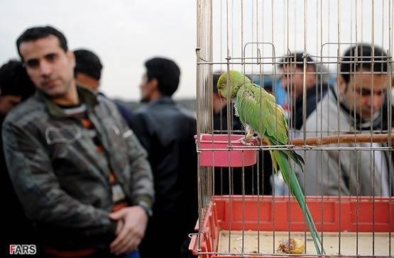 قاچاق حیوانات، قاچاق زندگی