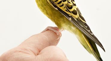 سنجش دمای پای پرنده