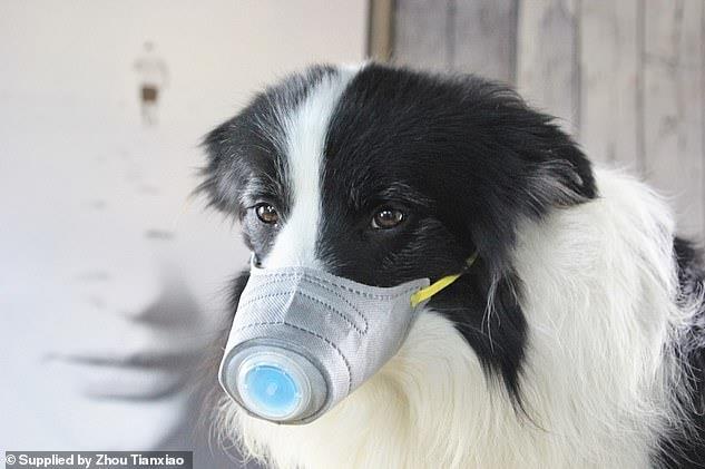 آیا حیوانات خانگی کرونا را منتقل میکنند؟
