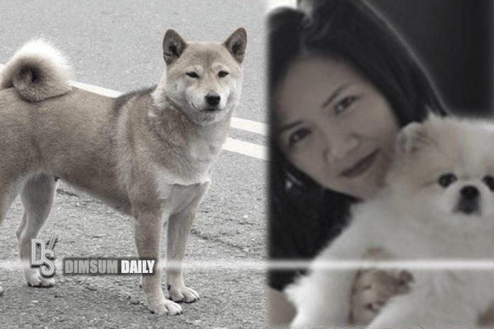 نشانههای کرونا در دو سگ و یک گربه