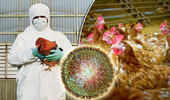 مانع ورود ویروس آنفولانزای طیور به سلولهای انسان چیست؟