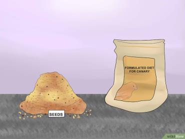 سعی کنید قناری را به مصرف غذاهای فرمولهشده عادت دهید