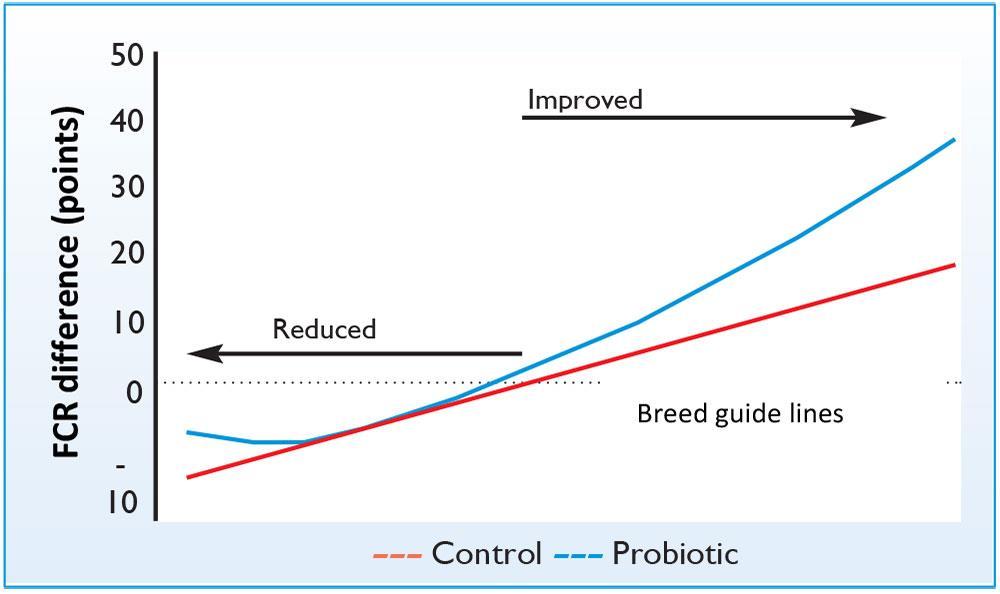 اثرات پروبایوتیکها بر عملکرد مرغها