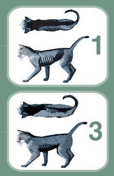 گربه لاغر