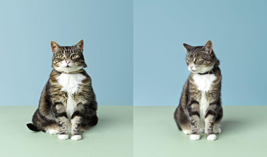 وضعیت بدنی در گربهها