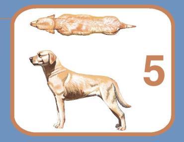 سگ متناسب