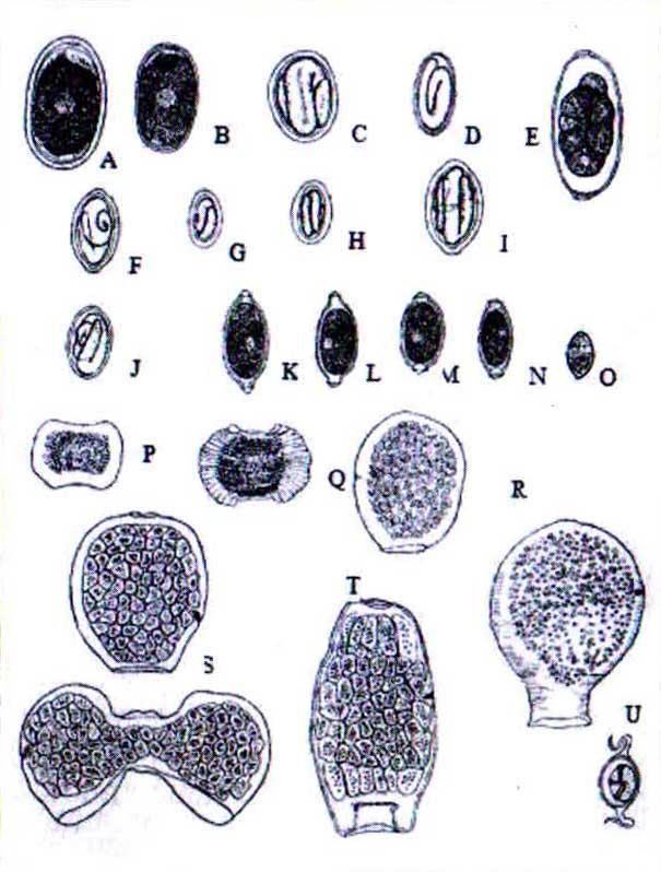 شناسایی تخم انگلهای طیور