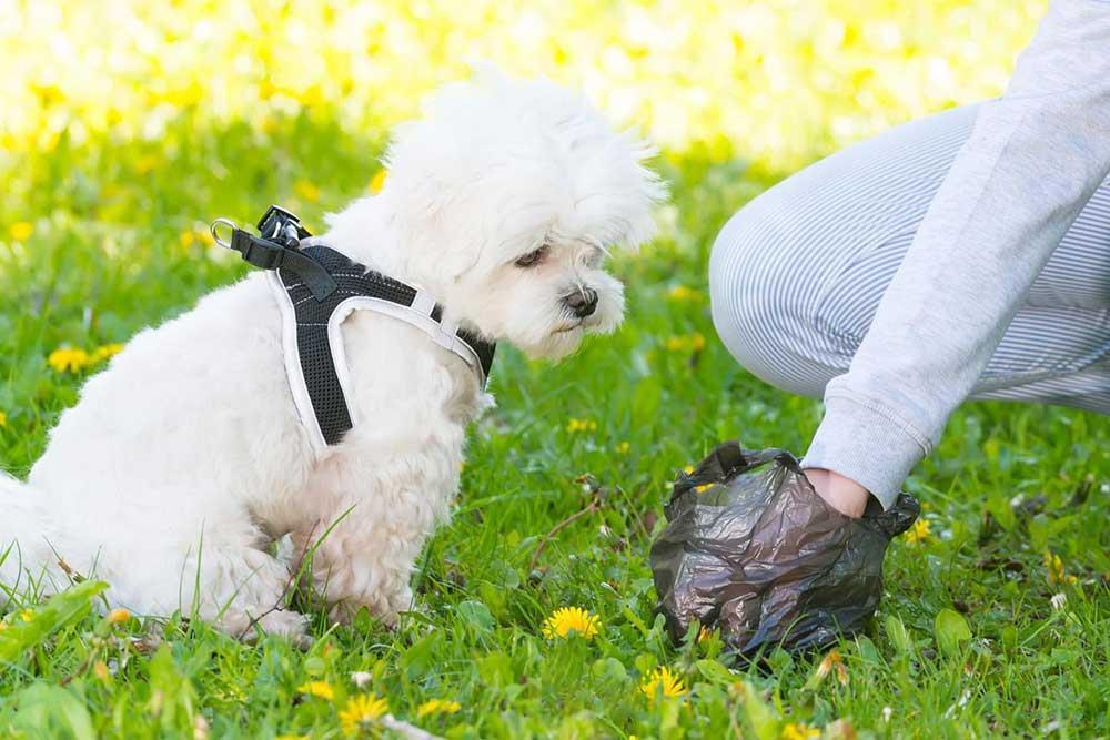 چگونه جلوی مدفوع خواری سگ را بگیرید؟