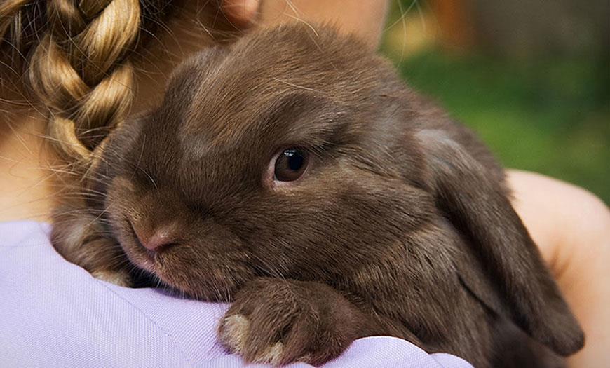 نکته هایی در نگهداری از خرگوش