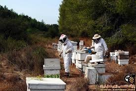 افزایش قیمت داروهای زنبورداری